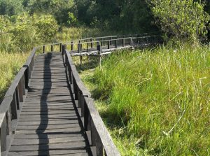 Saiwa-Swamp-National-Park.jpg | Saiwa Swamp National Park | Pinned Directory Kenya